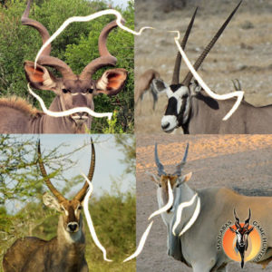 Kudu, Gemsbok, Waterbuck, Eland