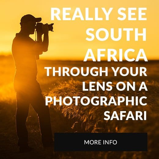 Photographic Safaris in South Africa Book Now
