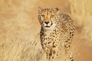 Lesser spotted creatures of the bushveld