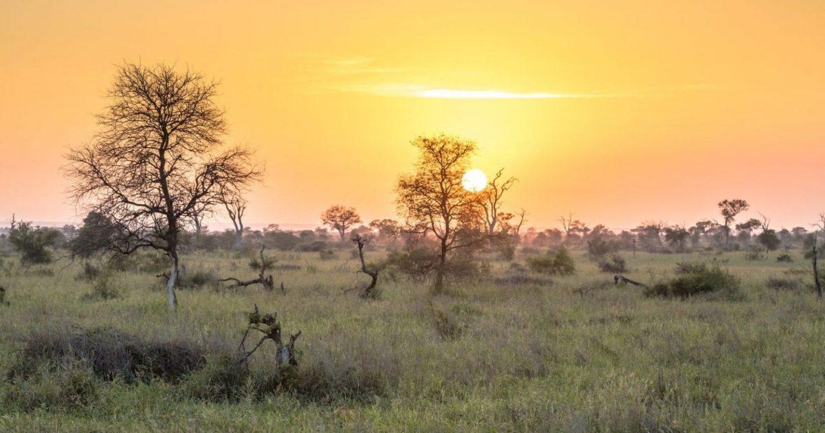 Sunrise over savanna